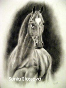 Kůň _