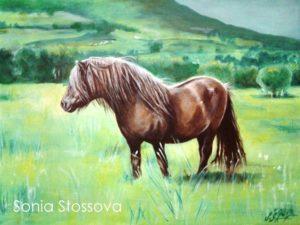 Shetland pony 2_