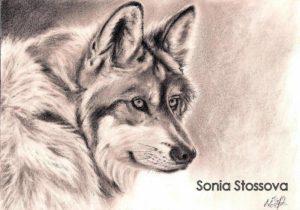Vlk 1_
